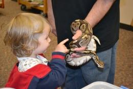 Reptiles at Omaha Public Library